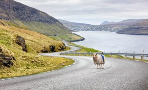 sheepview2