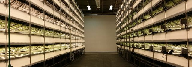 The era of vertical farms